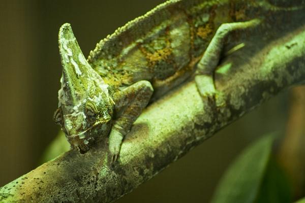 Lounge Lizard! by editfmah