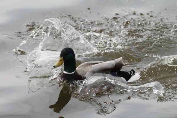 splash landing by ananny