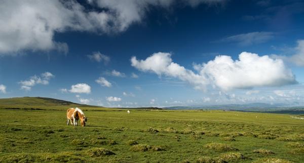 Dartmoor Pony by topsyrm