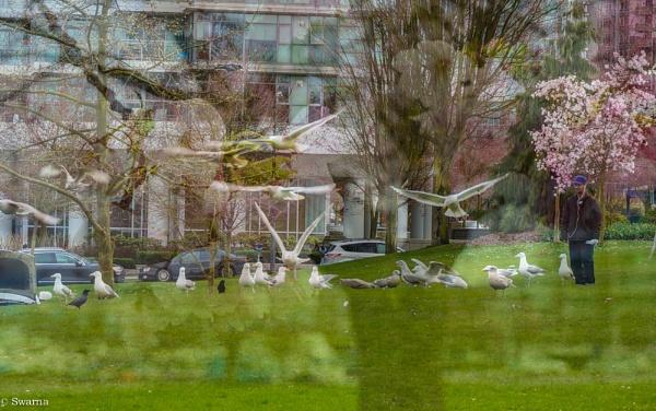Man and Birds - Multiple Exposures by Swarnadip