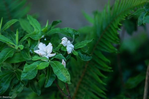 Macro Shot - Green Leaf IV by Swarnadip