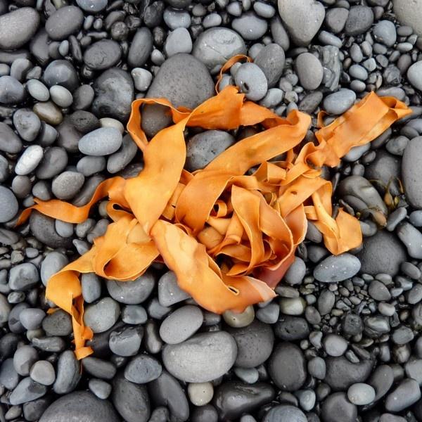 Kelp by Philip_H