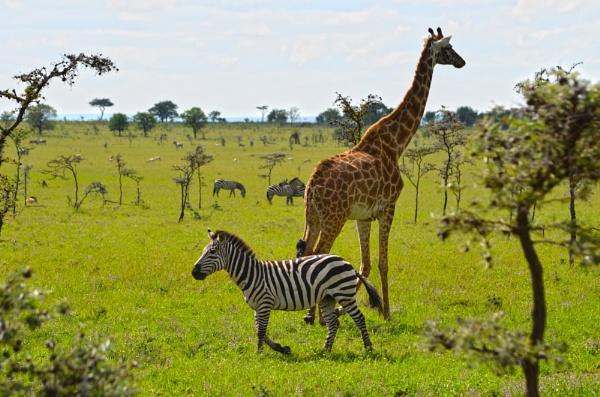 Serengeti by OceanOak