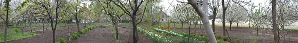 garden by Laslo