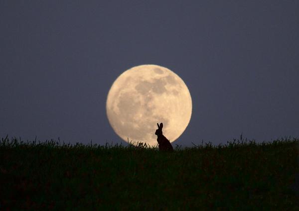Moongazer by Adamzy