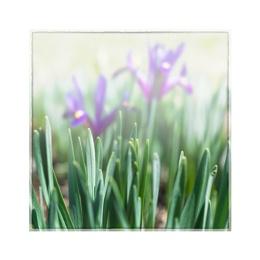 Iris and Dafodils