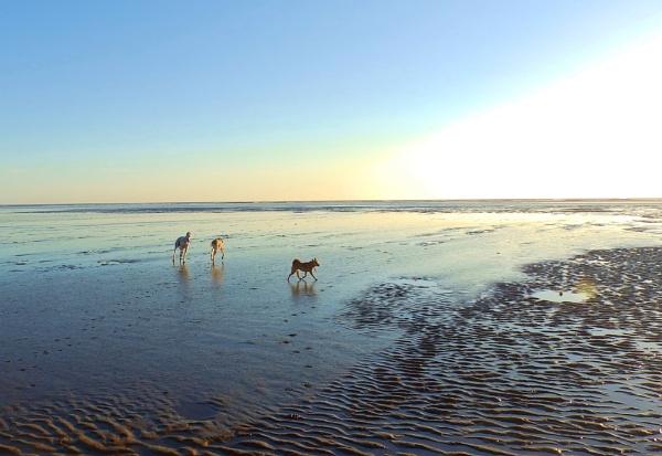 Dogs on Dawn beach by Gillken