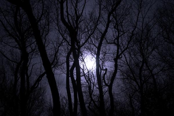 Blue Moon by TheStonedRanger