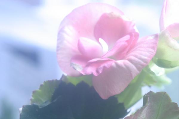 flowers summar