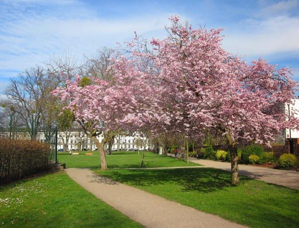 Spring in Cheltenham Spa by Glostopcat