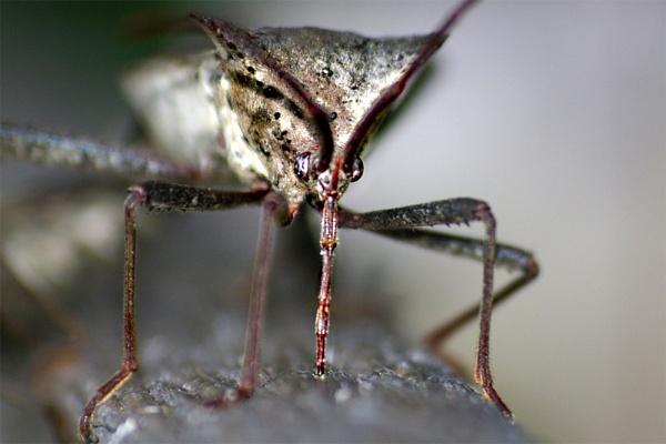 A Bug by wsteffey