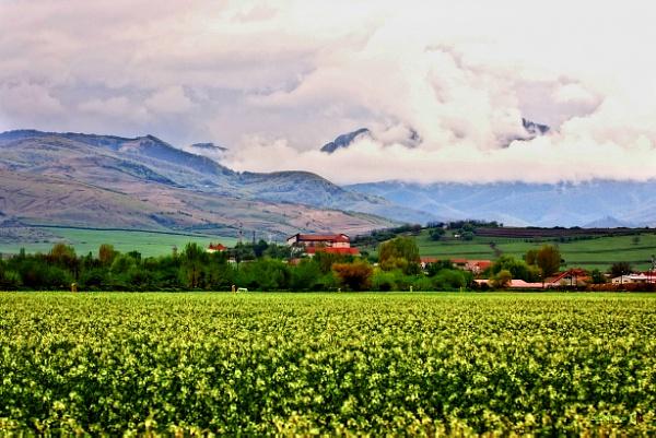 Canola landscape by calinutz78