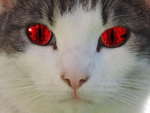 Evil Oscar by steve_i