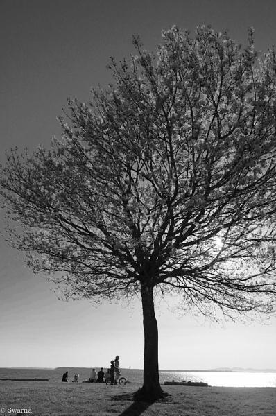 The Tree II by Swarnadip