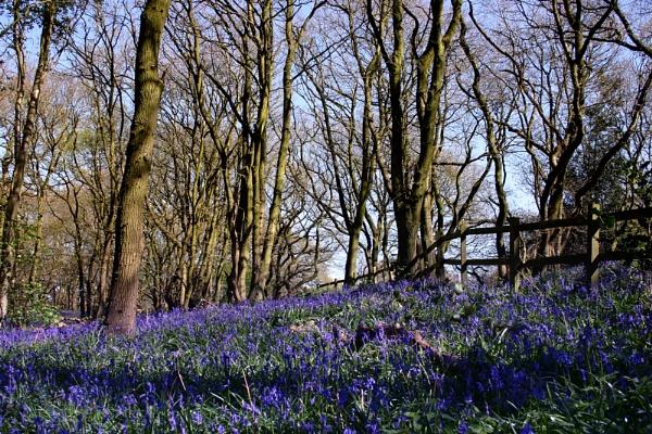 Burleigh Wood by nanpantanman