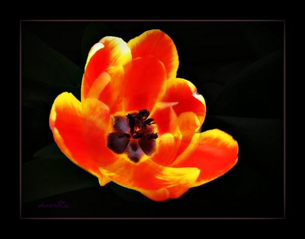 Indoor Spring by doerthe