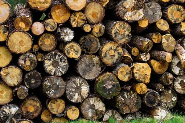 Log Pile by Dingus