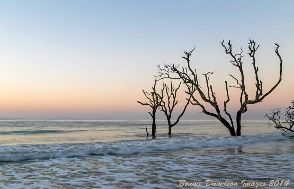Dawn by TexasSky