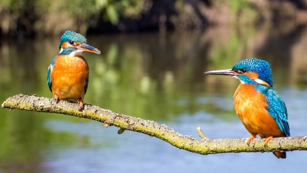 Nice pair by Stevetheroofer