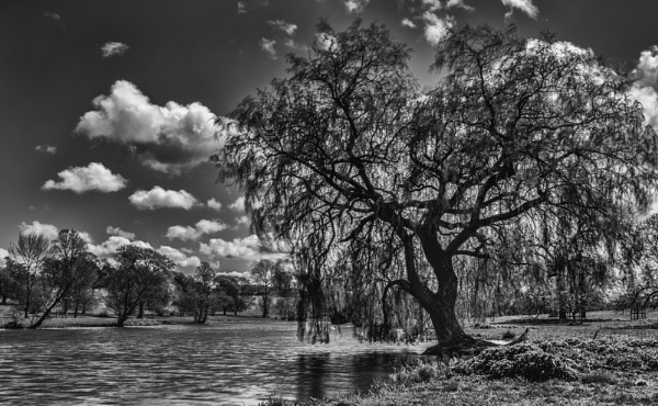 Weeping Willow by It_Paciccio85