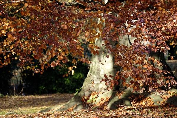 autumn by btu