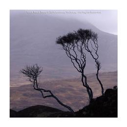 Loch Stack Trees