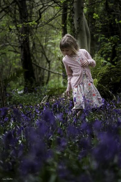 Lost in the Woods by neilrwalker