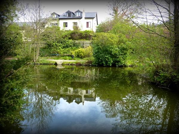 Water Garden by netta1234