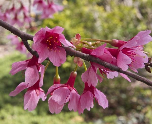 Tree Flowers by handlerstudio