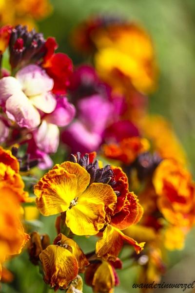 wall flower by wanderinwurzel