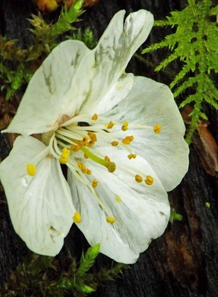 wild flower on bark with ferns by ZoeKemp