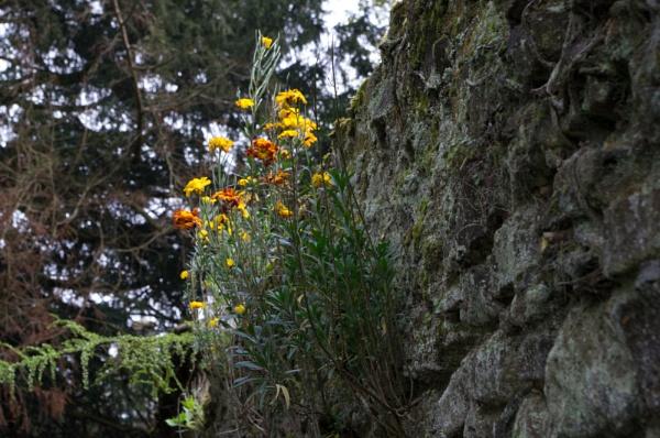 Wall Flowers by Teaka53