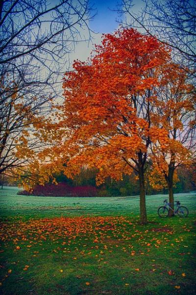 Autumn morning by Nobbythenobster2