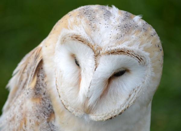 Owl by KenQuinn