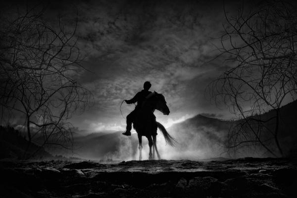 Black Horses by bara