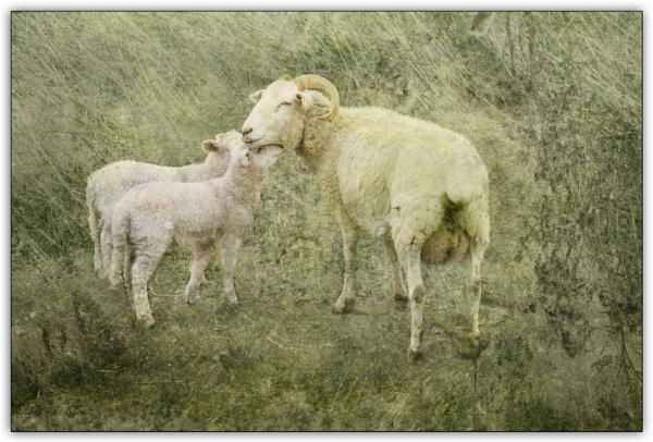 Nuzzling up to Mum by helenlinda