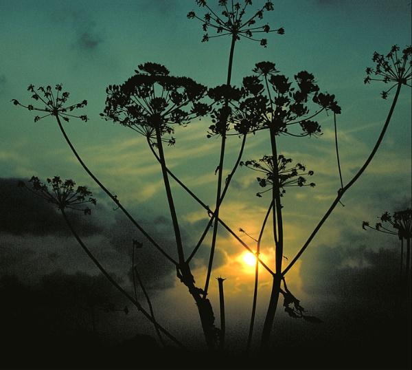 Silhouette by derekv
