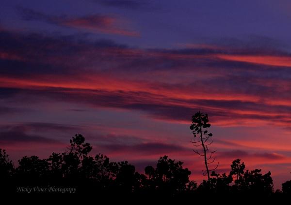 April  Sunset by nickyv32