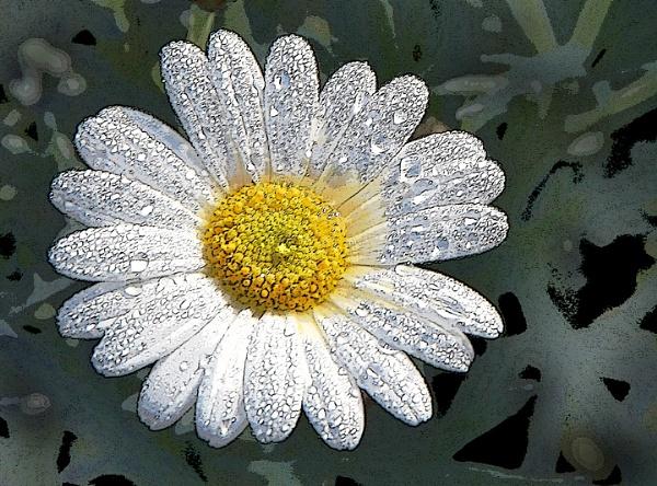 Diamond daisy by aliciabeesley