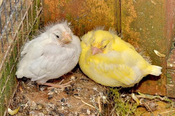 Two Little Birds by TonyBrooks