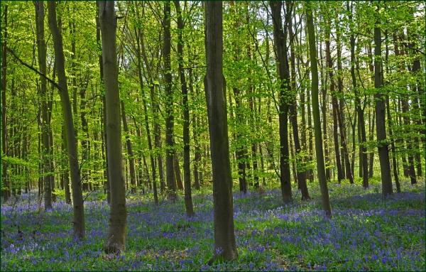 Beautiful Wood by KentishChap