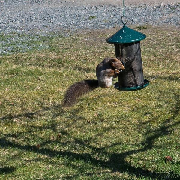 Feeding time by jaktis