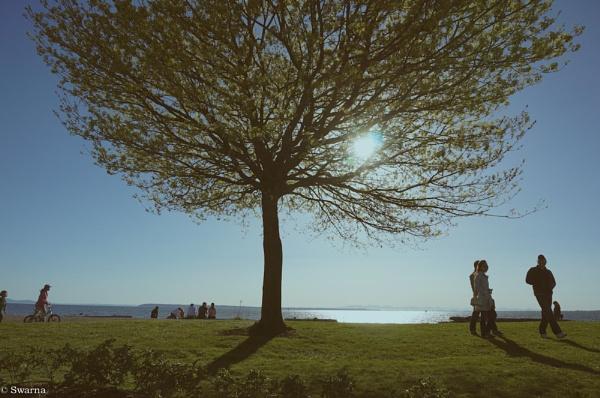 The Tree III - Contre Jour by Swarnadip