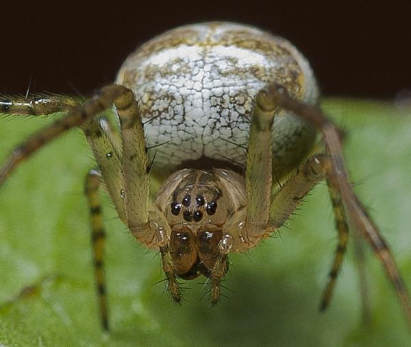 Spider by JonnyNI