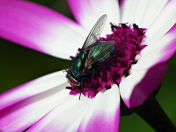 Velvet landing by michelle30