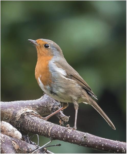 Robins Nest by kel55