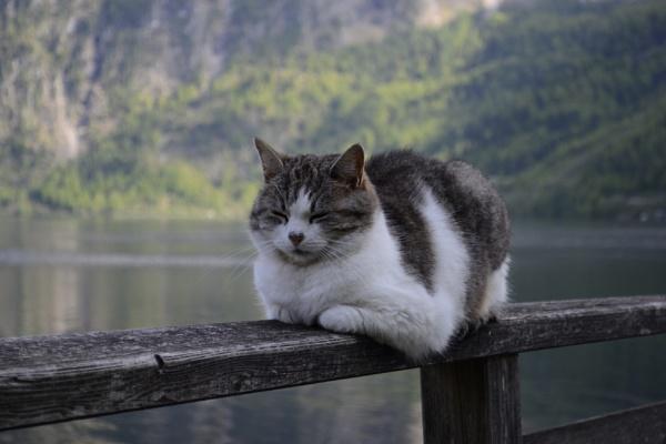 Sleeping cat by FloKl