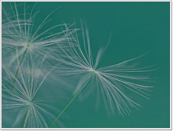 Soft Love ... by Traceyflowerpots