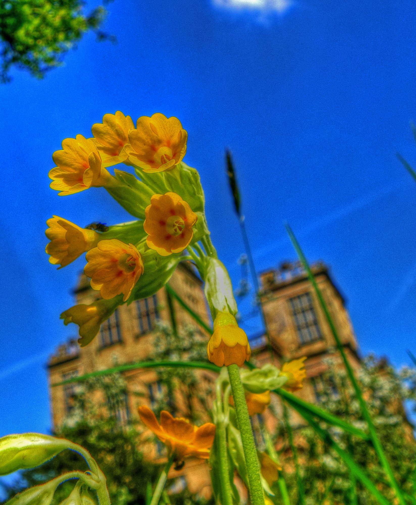 Flowers at Hardwick Hall