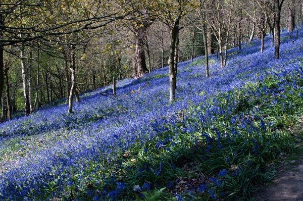 Blue Hillside by ChasD